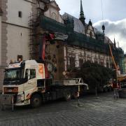 Převoz vánočního stromečku